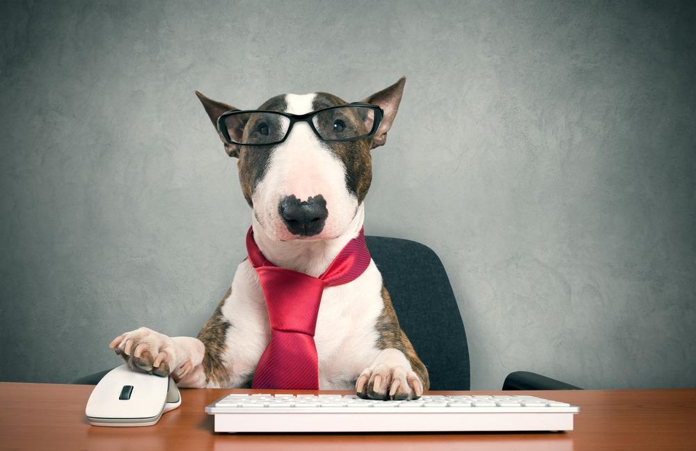 office desk dog working